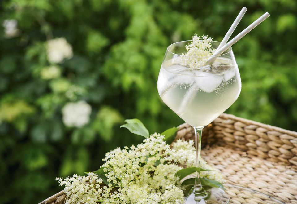 Elderflower cocktail with fresh elderflowers