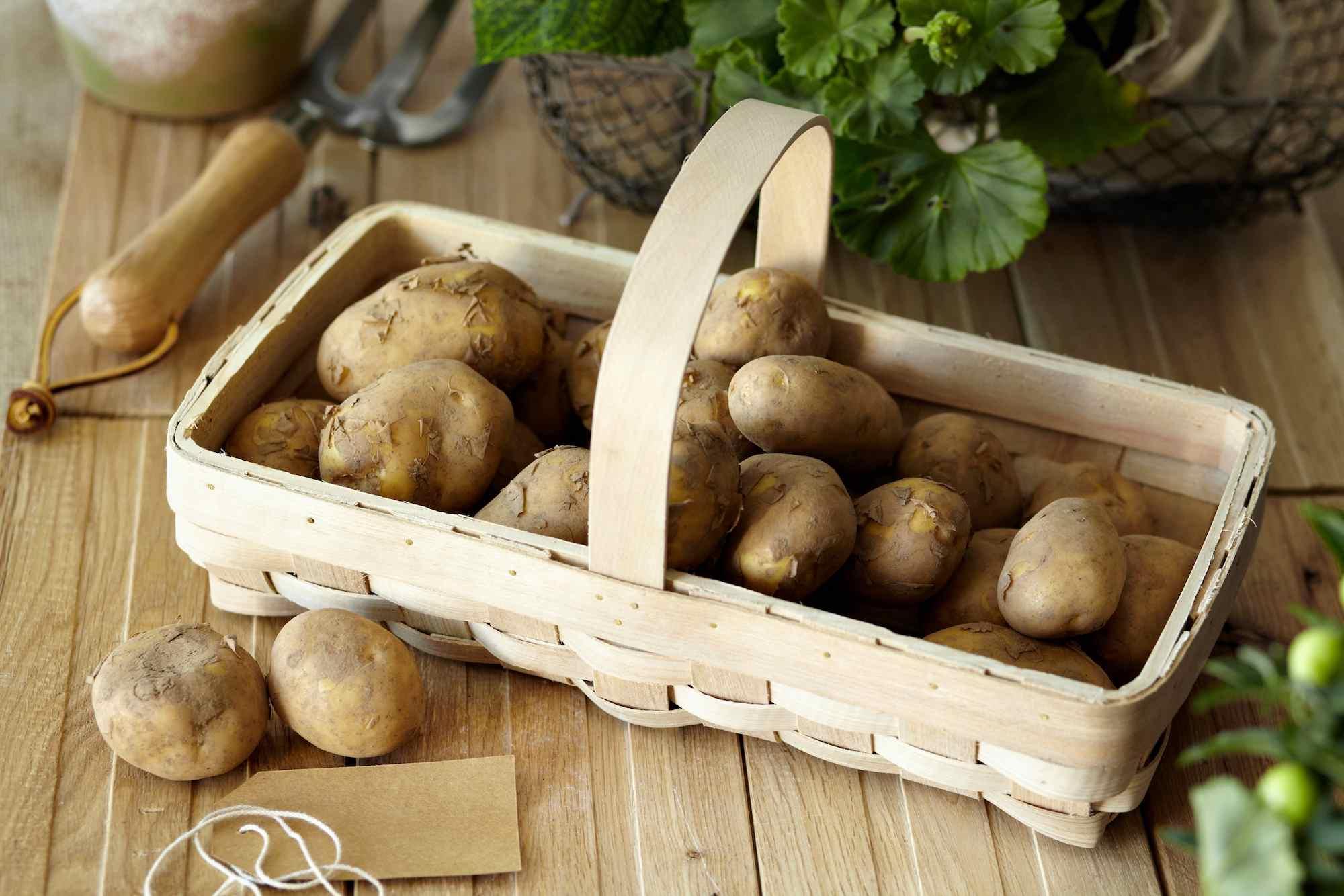Fresh-Raw-Potatoes