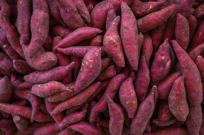 Lots of sweet potatoes in harvest season