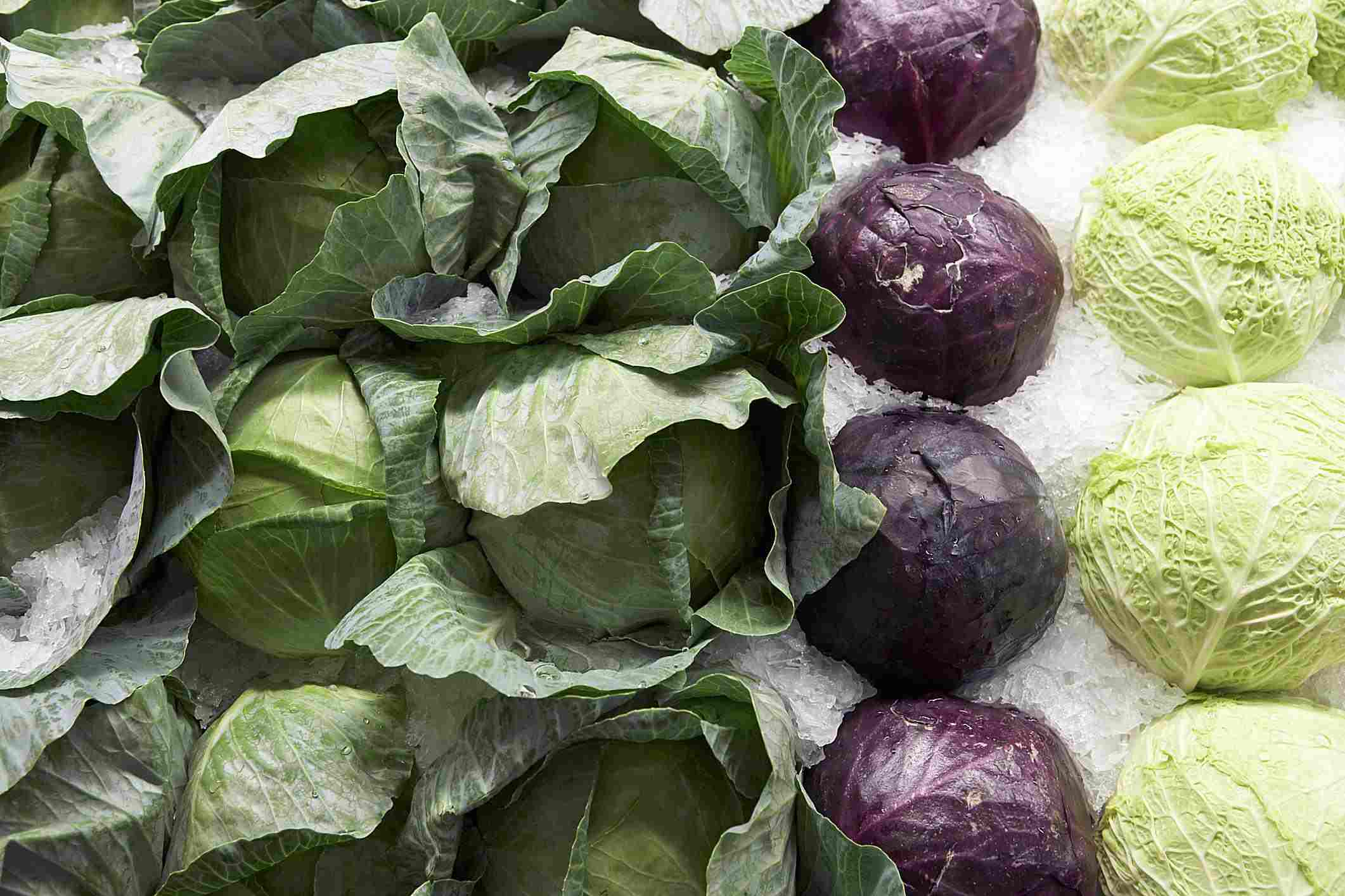 Three common cabbages: red, green, and savoy