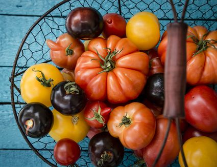 Different heirloom tomatoes in a wire basket