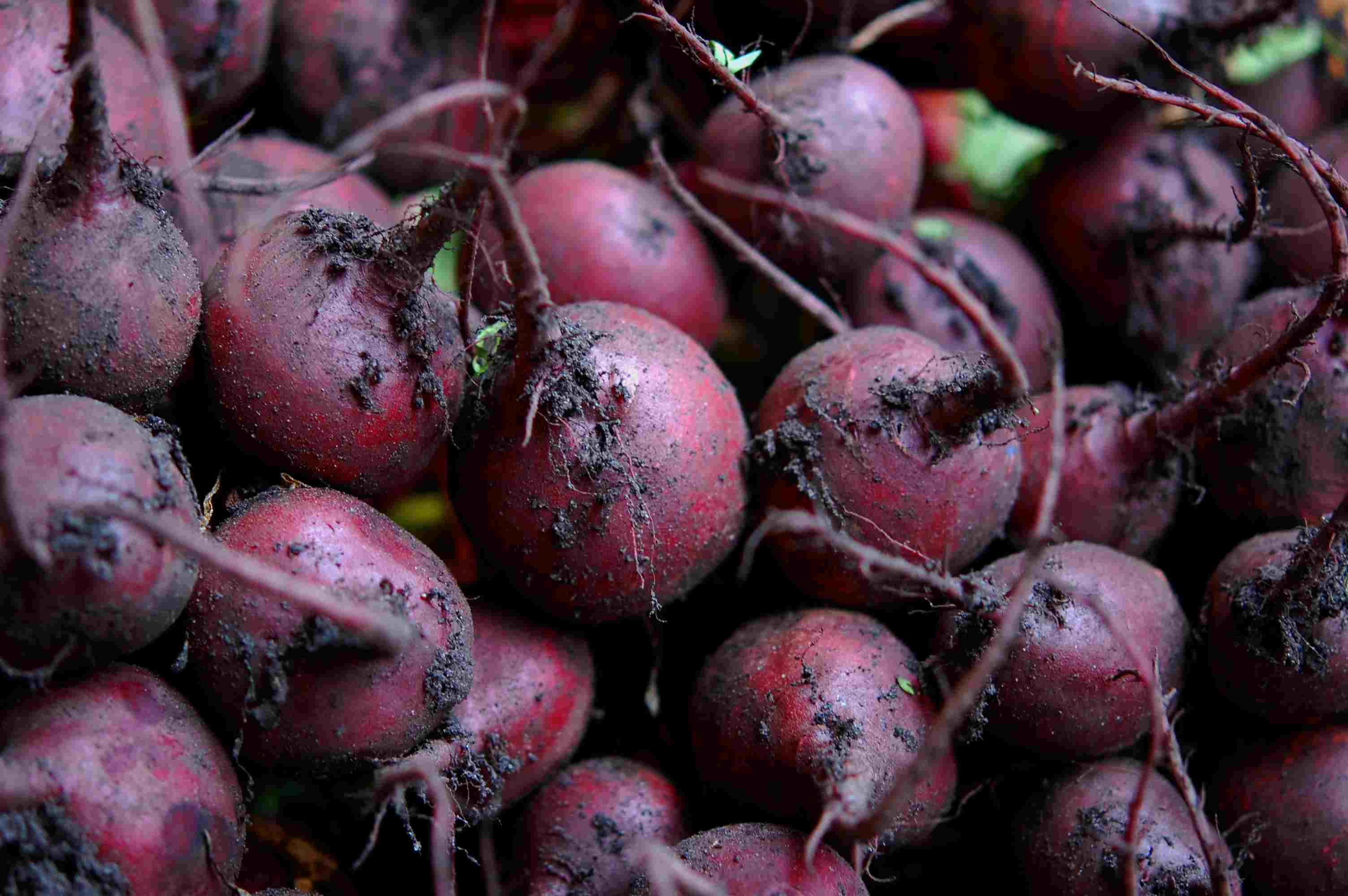 Pile of Beets for Sale