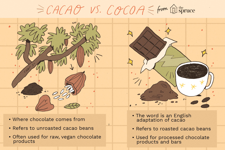 cacao vs. cocoa illustration